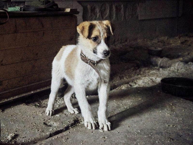 Щенок тявкал на пепелище сгоревшего дома пожар, собака, щенок