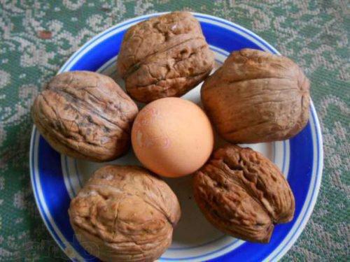 Сорт грецкого ореха Великан — описание и выбор саженца.