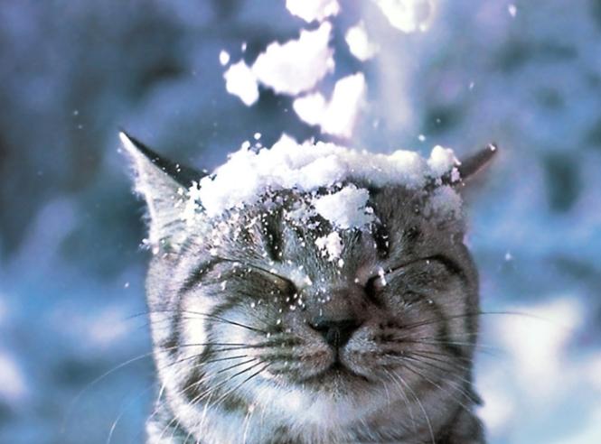Особенности содержания кошки зимой