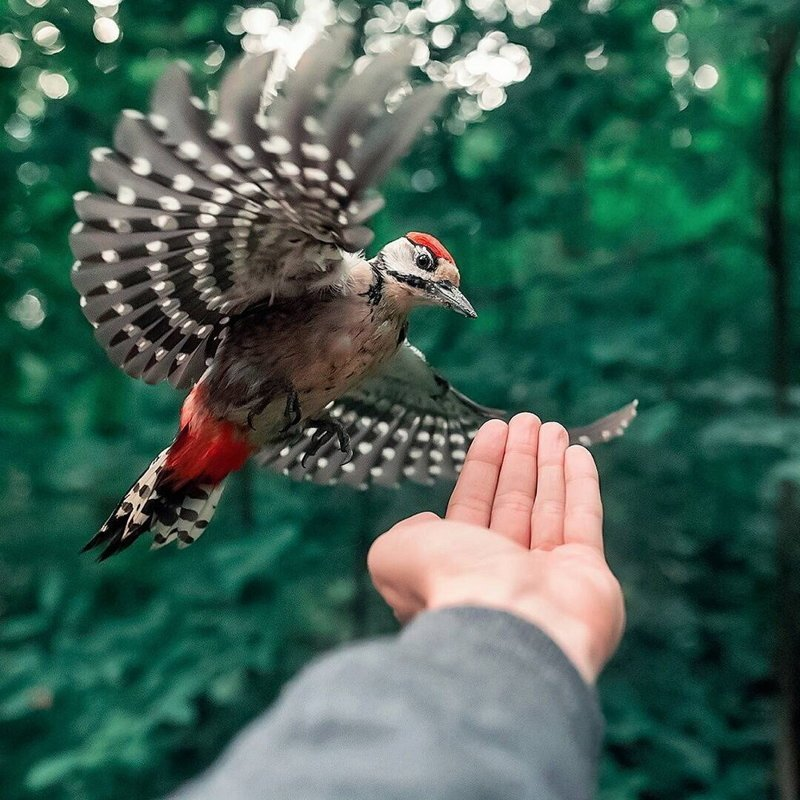 Дикая природа Финляндии: симпатичные портреты животных Осси Сааринена Осси Сааринен, Финлянди, животные, портреты, природа, фото, фотограф