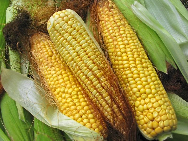 Кукурузные рыльца для лечения и похудения