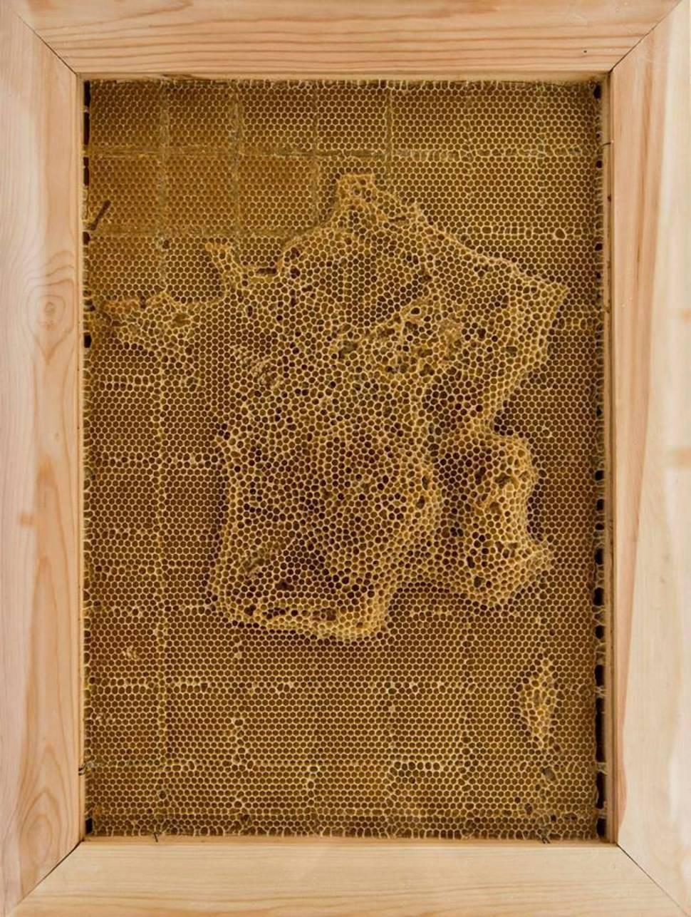 Франция воск, карта, пчела, скульптура