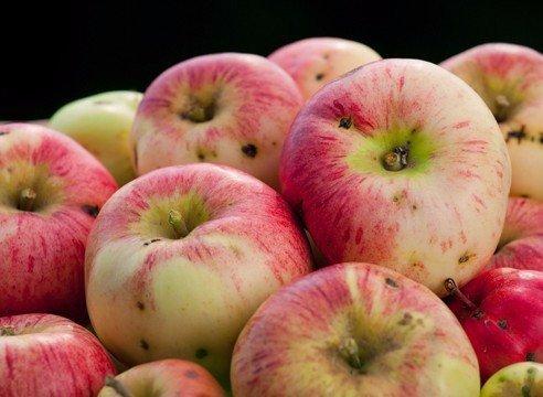 САД, ЦВЕТНИК И ОГОРОД. Опять червивые яблоки...