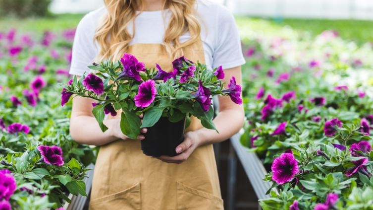 Какие растения-инсектициды помогут бороться с вредителями в саду и огороде? Часть 1. Защитники – рядом