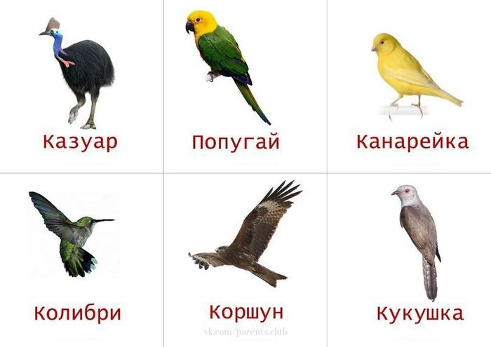 Изучаем птиц с ребенком в картинках