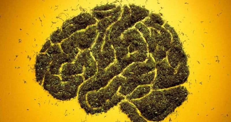 Ученые официально объявили о вреде марихуаны