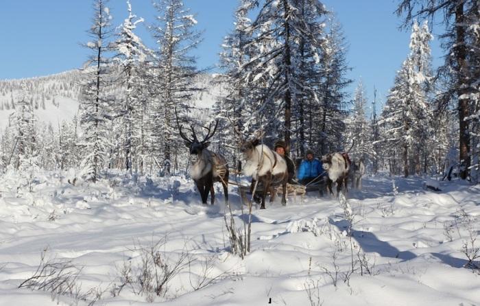 Оленевод в самом холодном уголке планеты. /Фото:ykt.ru
