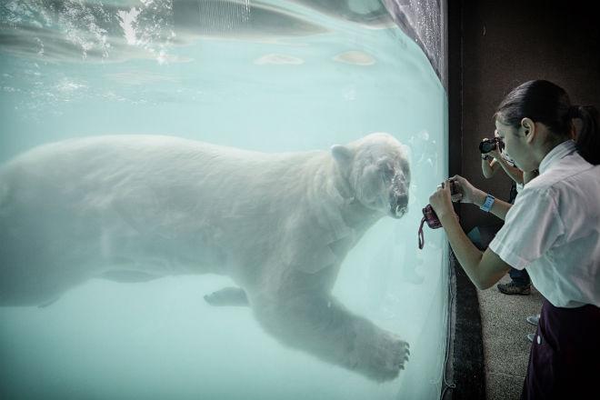 Существа из далекого прошлого, которых случайно нашли во льду