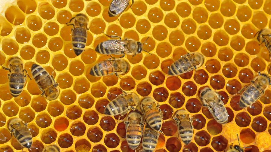 Пчёлы против насморка