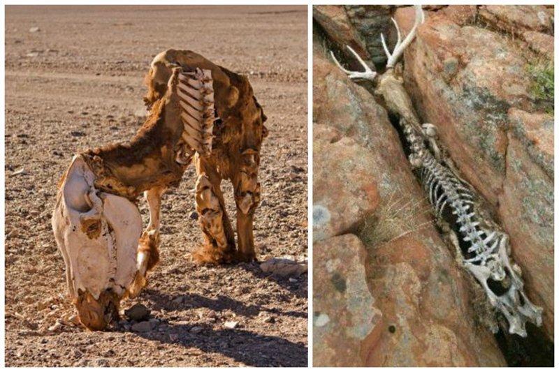 А бывает и так - сама природа чинит разные препятствия. Впрочем, выживает сильнейший жестокая, животные, звери. выживание, интересное, природа