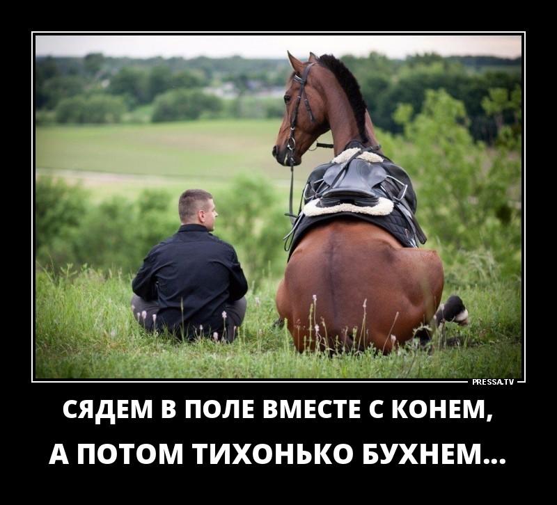 Анимация, смешные картинки с лошадьми и надписями