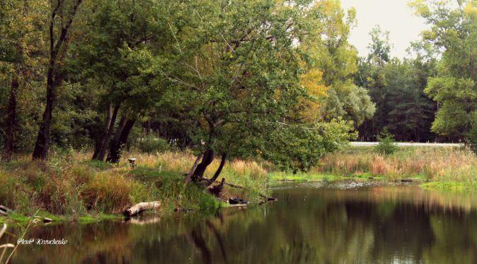 Осенью порою