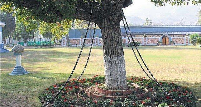 13. В Пакистане есть арестованное дерево горилла, истории, кино, китай, корея, факты, япония