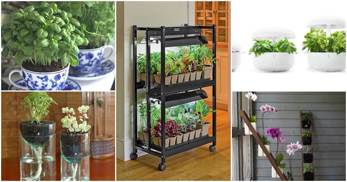 15 идей для озеленения домашнего интерьера