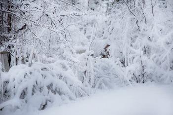 Синоптики прогнозируют морозную погоду в Москве до конца февраля