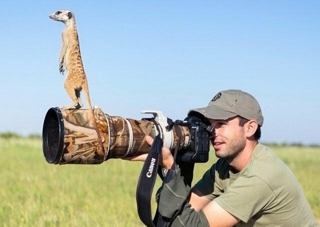 Эти забавные животные животные, фото, юмор