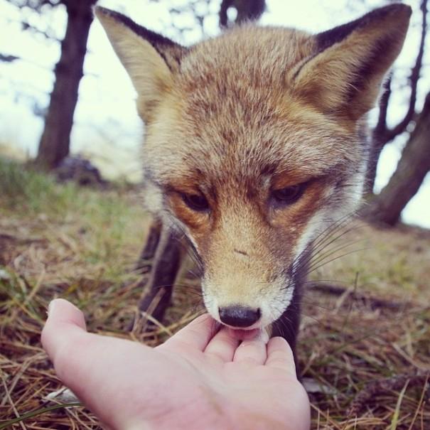 Общение с лесными животными