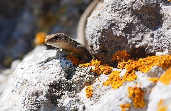 Кот Мостик назначил ящерицу Оксану ответственной за экологию
