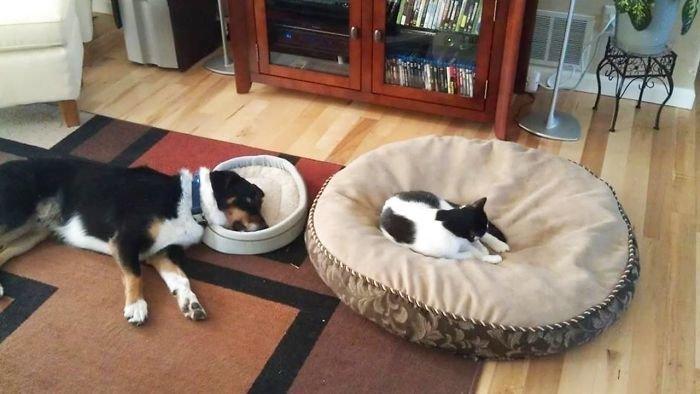 Н - наглость животные, кот, коты, кошки, приколы с животными, смешно, фото, юмор