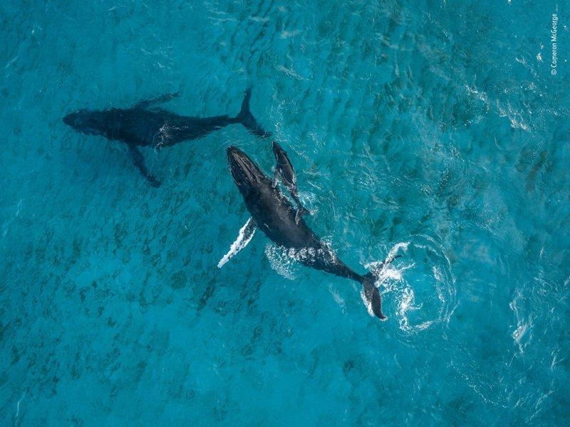 Лучшие снимки дикой природы - 2018 природа