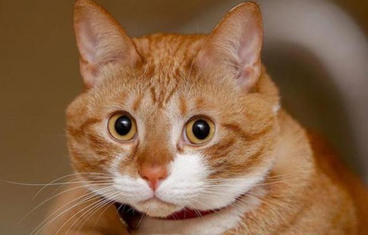 История про наглого кота, ко…
