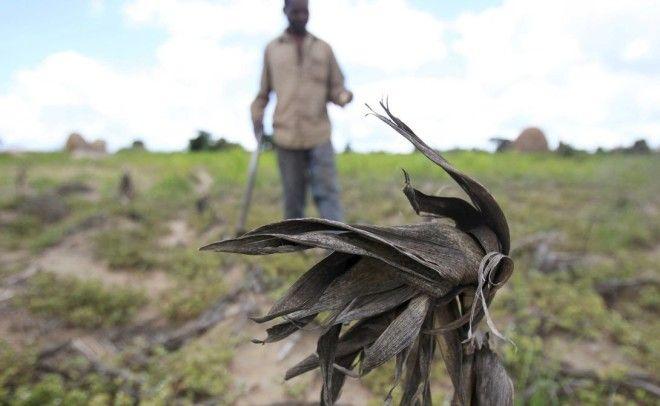 ГвинеяБисауПродолжительность жизни 4676 года5 врачей на 100 000 человек в стране 9 населения заражено малярией в то время как темпы распространения холеры тоже находятся на подъеме Материнская и младенческая смертность очень распространена кроме того здесь до сих пор культивируется варварский обычай усечения женских половых органов