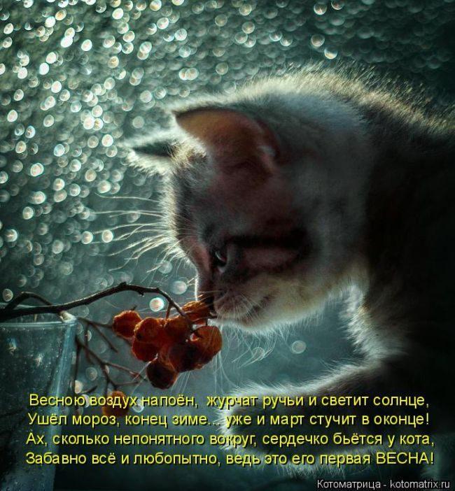 Смешные котоматрицы))