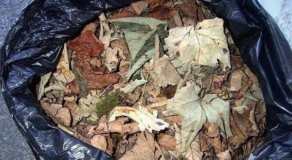 5 самых полезных применений листвы в огороде домашний очаг...