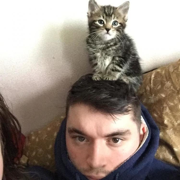 Мужчина приютил кошечку и та заполнила собой всю его жизнь