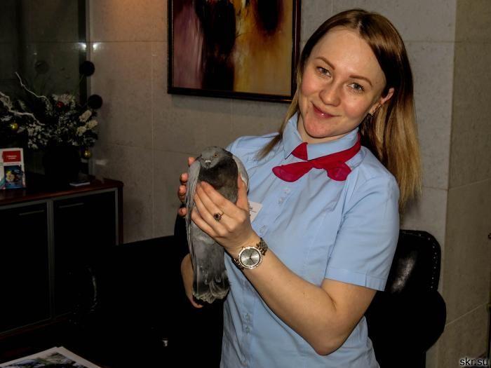 Сотрудники южно-сахалинской гостиницы спасли птицу от гибели