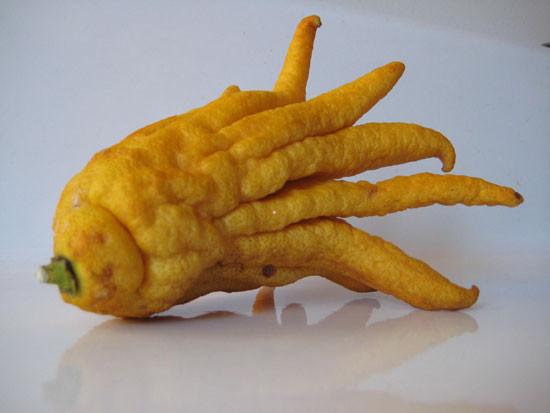 Рука Будды еда, овощи, факты, фрукты, экзотические овощи и фрукты