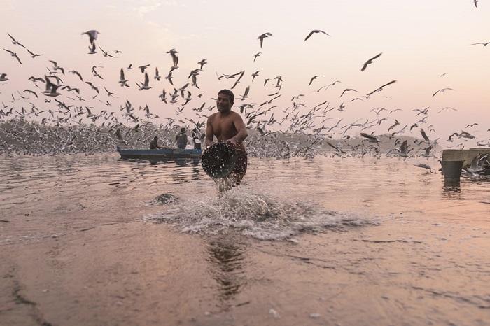 В зимнее время огромные стаи кричащих чаек проносятся над водами правого притока Ганга.