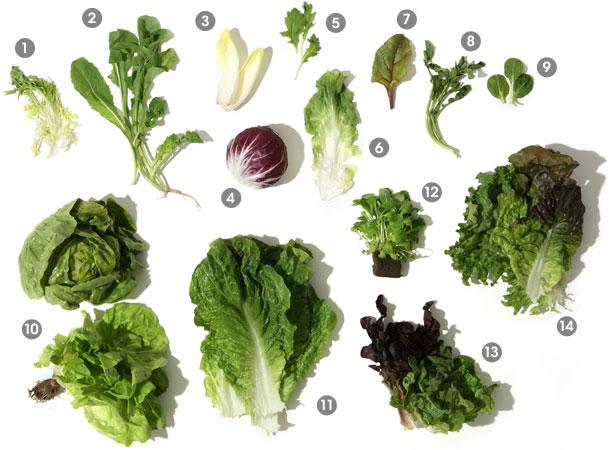О разнообразии салатных листьев