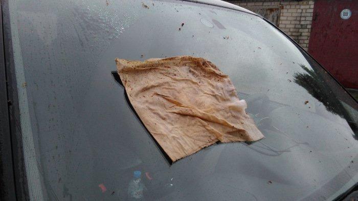 «Дедовские» методы очистки автомобильного стекла