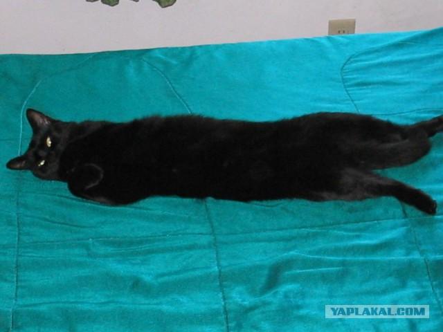 Тина - это наша кошка