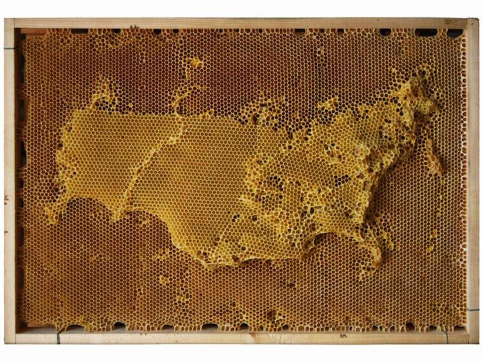 Россия  воск, карта, пчела, скульптура