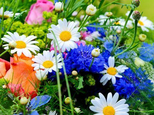 Как по дате рождения определить свой цветок-оберег