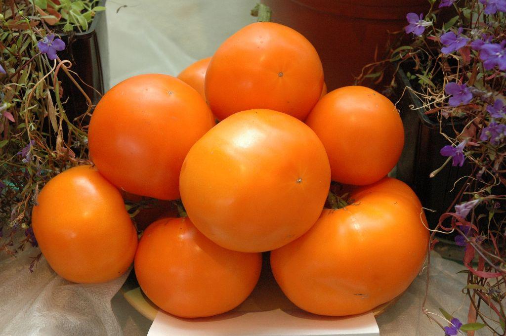 Томат Дина: описание сорта, характеристика, урожайность, фото