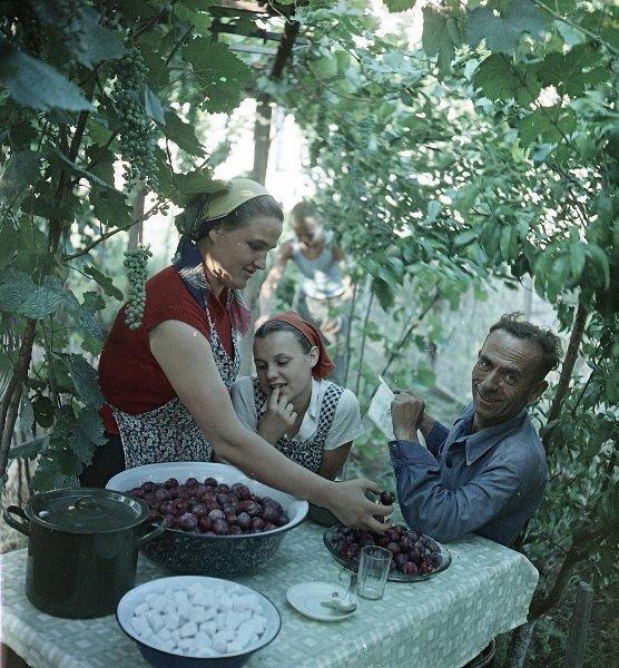 Варенье из фруктов собственного сада Всеволод Тарасевич, июль 1957 года,  Грузинская ССР, г. Рустави, МАММ/МДФ.