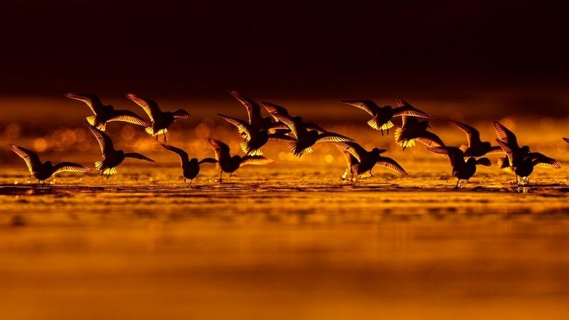 17 лучших фото птиц с конкурса Bird Photographer of the Year