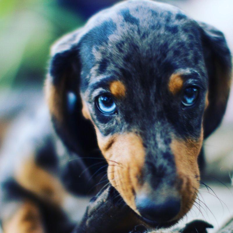Курьезный случай на выгуле щенка