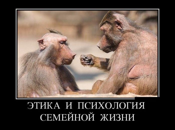 https://mtdata.ru/u28/photo625E/20320235606-0/original.jpg