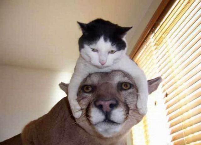 Про котей и людей веселые картинки