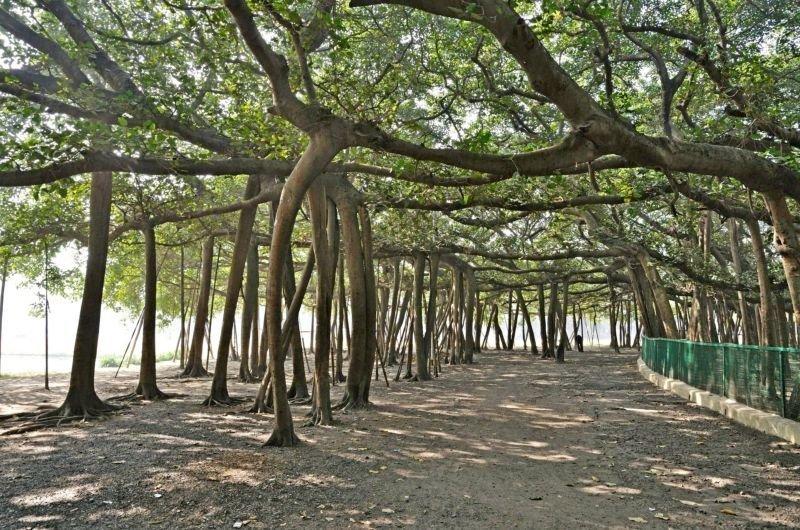 Огромный лес всего из одного дерева интераесное, природа, труднодоступные участки