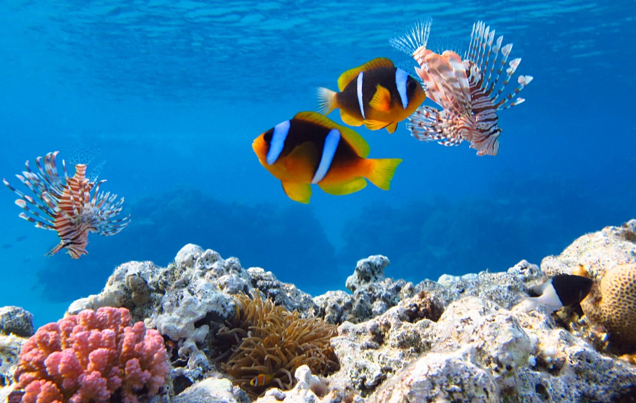 издавна повелось, подводный мир картинки большого размера факт, что