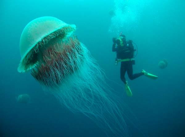 Самая опасная медуза в мире (Топ-5)