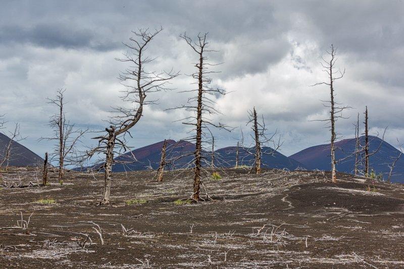 Мертвый лес—зловещее место недалеко от вулкана Толбачик, который и виновен в том, что пейзажи этого места стали пустынными и нагоняющими страх. В 1975 году случилось сильное извержение, тогда раскаленный пепел накрыл леса вокруг вулкана, уничтожив Russia, travel, животные, камчатка, факты