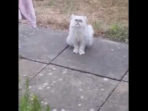 A crazy looking cat at his mom's house!