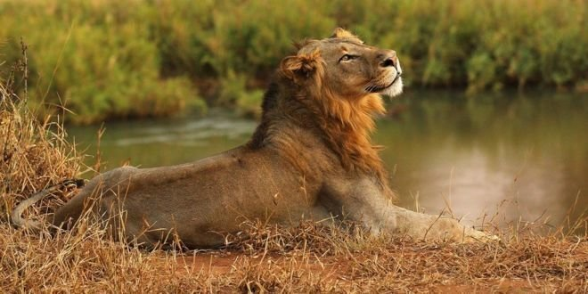 Львы в Южной Африке съели бр…