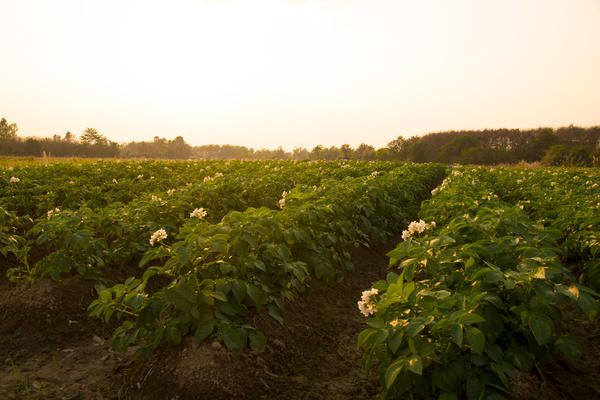 Благодаря методу Балабанова некоторые колхозы нашей страны добились небывалых урожаев